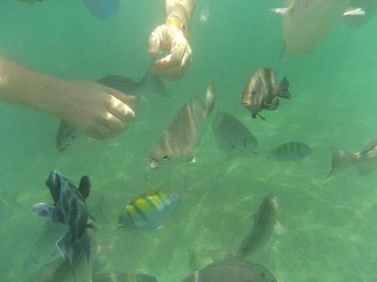 Azul Ixtapa Grand Spa & Convention Center: Kayak tour with snorkelling