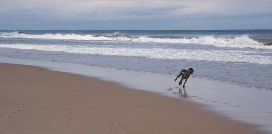 Mill House Inn : Joyous dog on Main Beach East Hampton NY