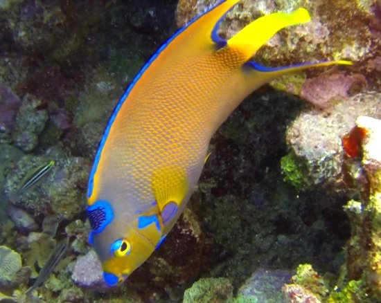 Utopia Village: Lots of colorful reef fish