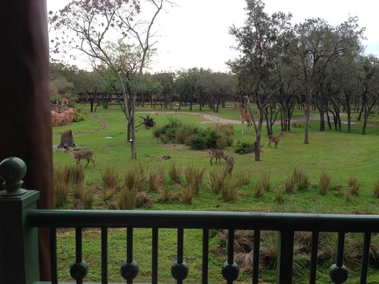 View Of The Arusha Savanna From Room Picture Of Disney