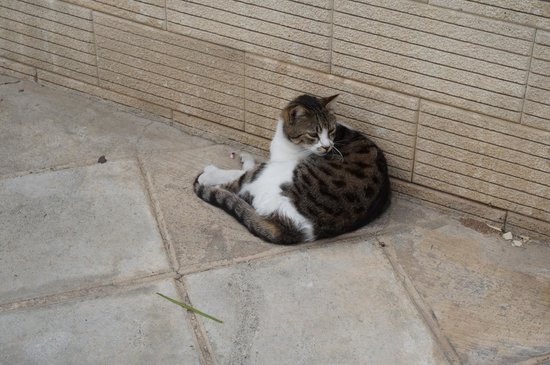 Atlantica Oasis Hotel: local cat! he is actually mean, do not feed him too much;)