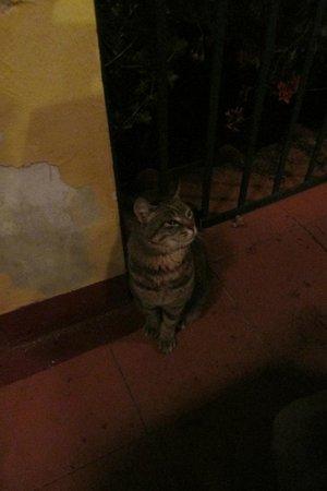 La Terrazza Del Principe : Welcome cat