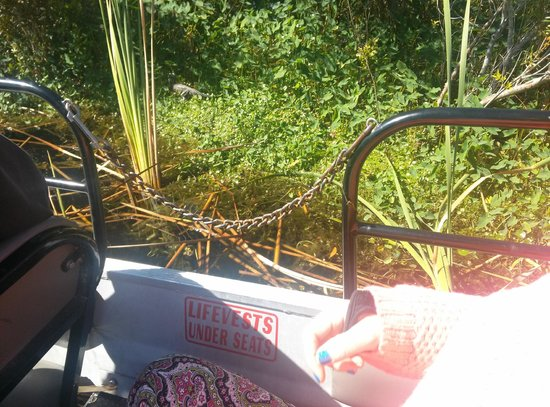 Boggy Creek Airboat Rides: Baby alligator