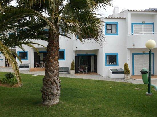 Quinta do Paraiso: nice palm trees