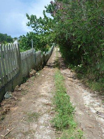 Milly's Inn Inc. : Path to the beach