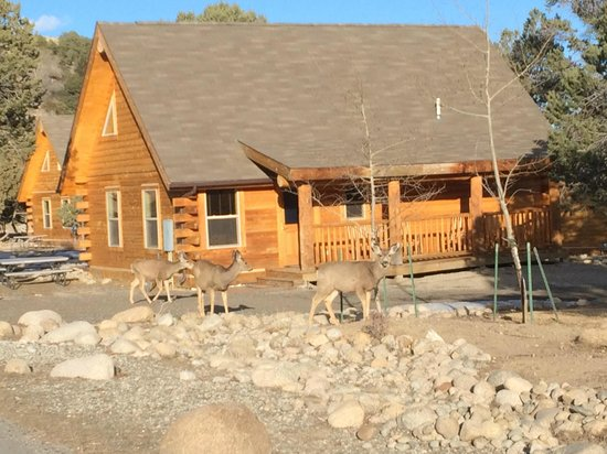 Mount Princeton Hot Springs Resort: Deer in front of cabin