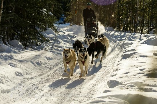 Muzzy's Place Dogsled Adventure -  Day Tours: Start
