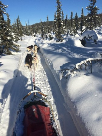 Muzzy's Place Dogsled Adventure -  Day Tours: Blazing trail