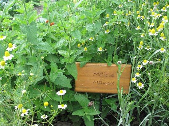 Stifterhof: reichlich ausgestatteter Kräutergarten