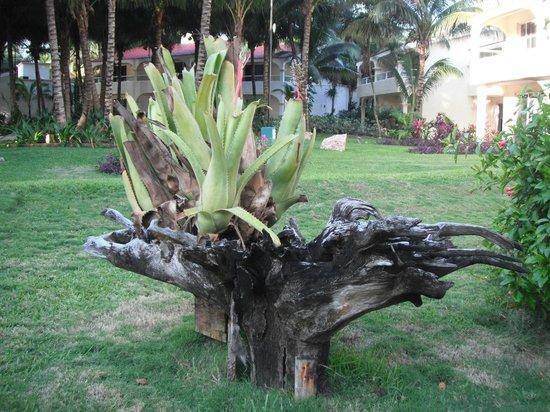 El Dorado Sensimar Riviera Maya: Cactus
