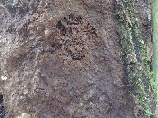La CasaBlanca: Las latas- termitas