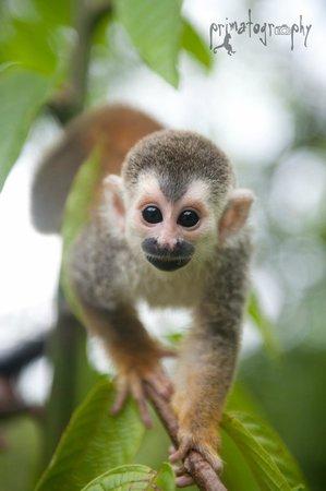 KSTR Monkey Tour