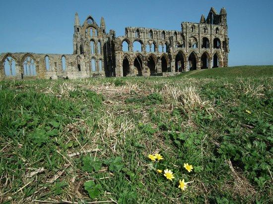 Whitby Abbey : Abbey
