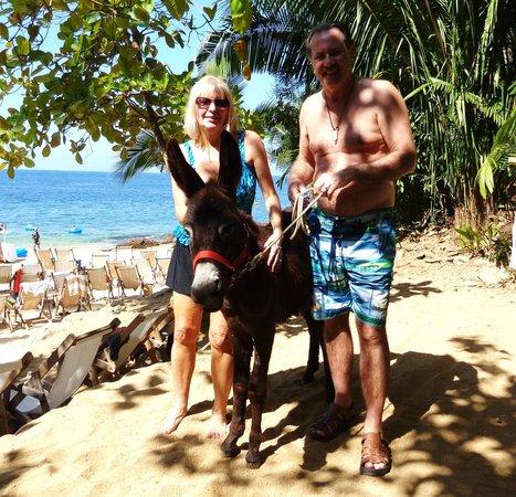 Vallarta Adventures - Las Caletas Beach Hideaway : 9 month old Donkey