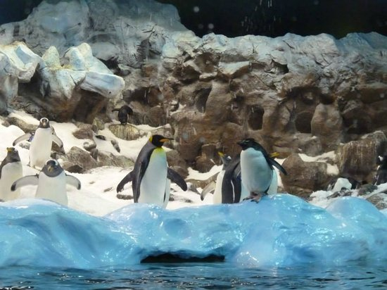 Loro Parque: Planet Pinguinos