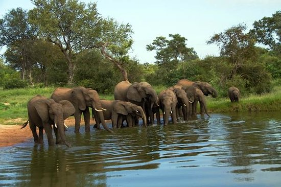 Motswari Private Game Reserve: Elephants
