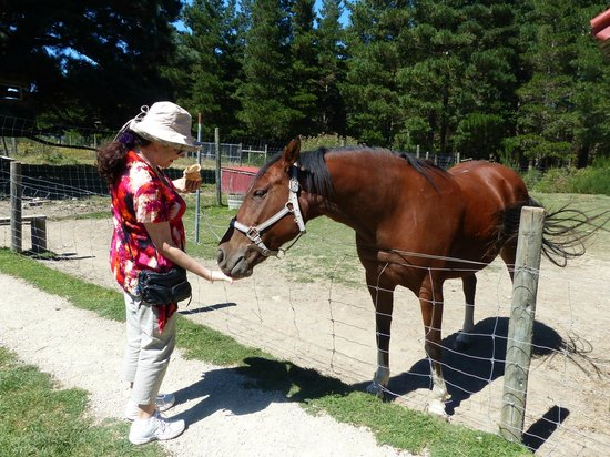Wai ariki Farm Park, Cafe & Gallery: Beautiful horse