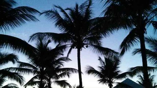 Grand Bahía Principe San Juan: The palm trees at sunset outside our room.