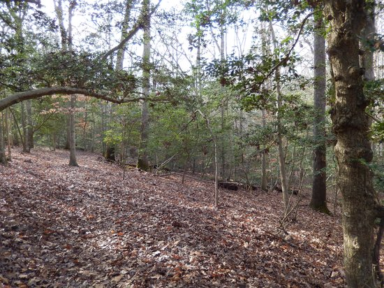 Gaines' Mill Battlefield: Wooded area of the battlefield
