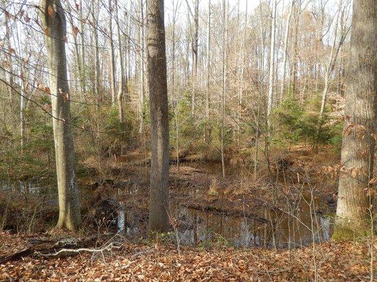 Gaines' Mill Battlefield: Creek inside the woods