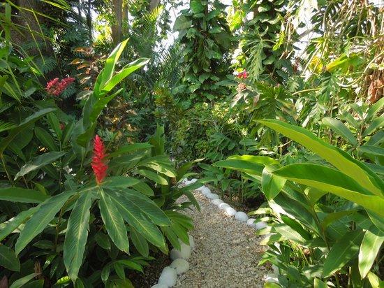 Bahia del Sol Beach Front Hotel & Suites : Resort garden