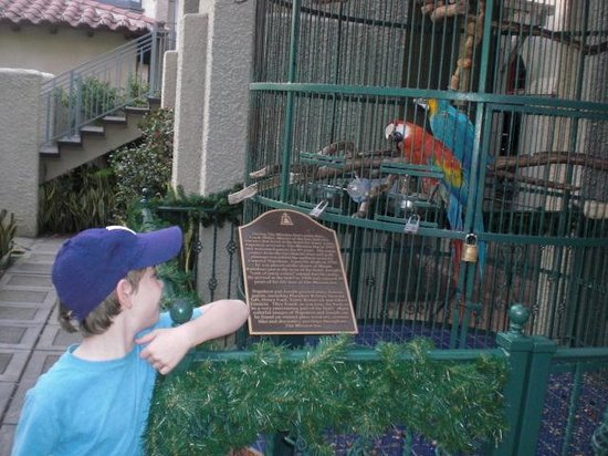 The Mission Inn Hotel and Spa: Hotel Parrot