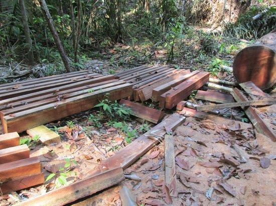 Reserva Natural Palmari : mahogany tree felled