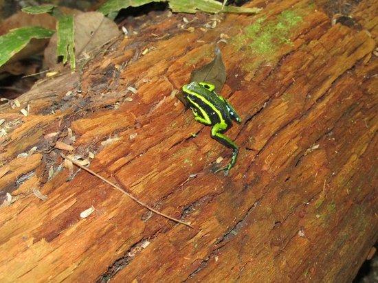 Reserva Natural Palmari : frog