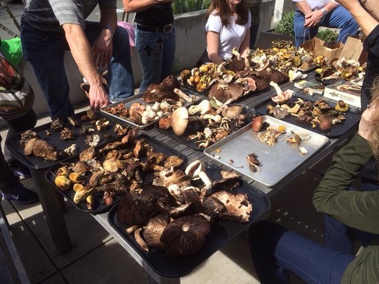 Relish Culinary Adventures - Day Tours: Our bounty of mushrooms.