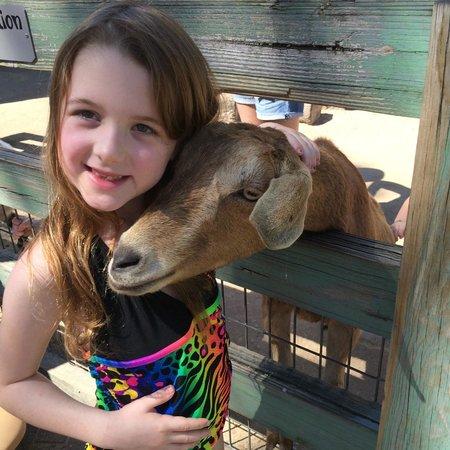 Tampa's Lowry Park Zoo : Petting zoo
