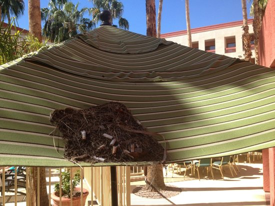 Hilton Phoenix Airport: Nest of trash and cigarette butts on the pool umbrella