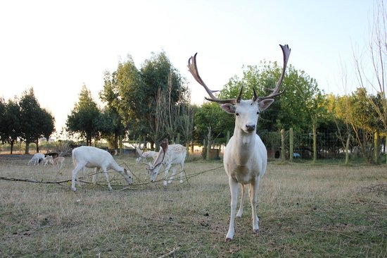 Glendeer Lodge: deer in the yard