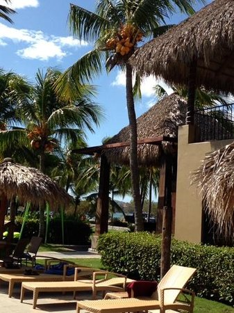 Flamingo Beach Resort & Spa: coconut trees pool side