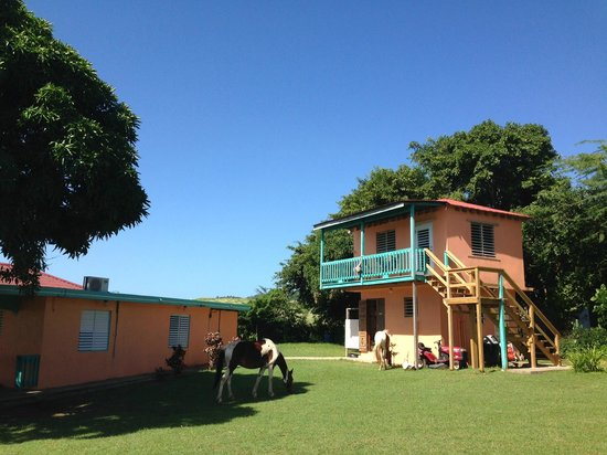 "Hector's by the Sea: ""The Mango"" casita with visiting horses"