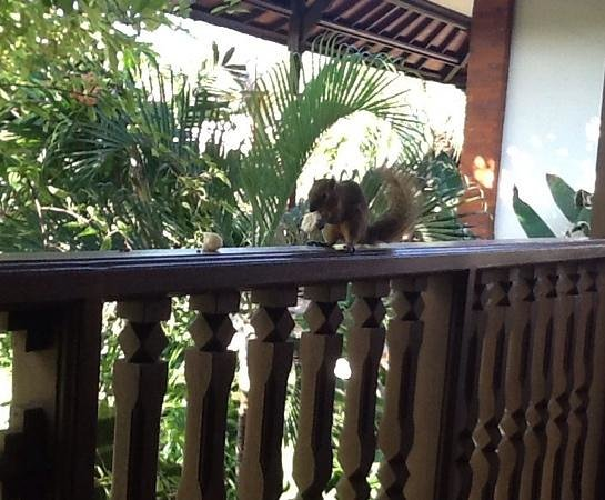 Padma Resort Legian : breakfast for the resident squirrels