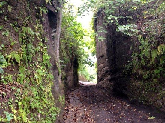 Hacienda Puerta Del Cielo Eco Spa: Driveway -- totally terrifying!