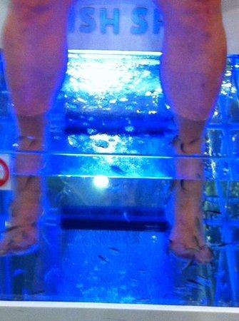 Getting a fish pedicure picture of fish spa mexico for Garra rufa fish pedicure locations