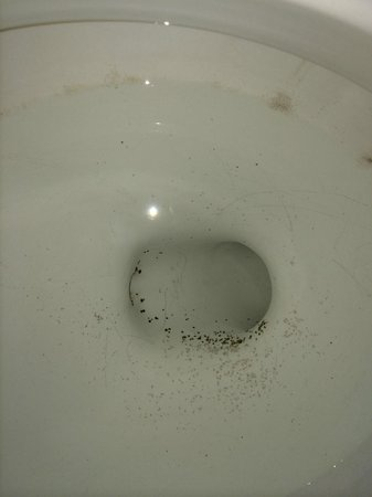 Motel 6 Austin - Midtown: Mildew in bowl AFTER I partially cleaned it.
