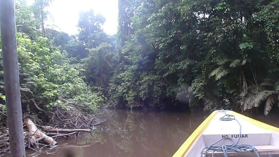 Yarina Eco Lodge: en la barcaza paseando por el Napo.