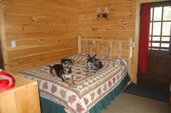 Pemi Cabins : Our dogs love it here too