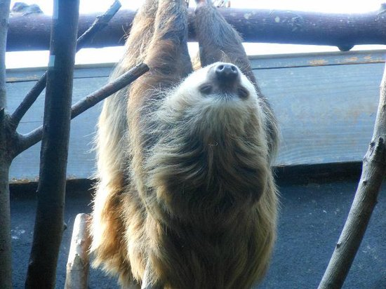 Birmingham Zoo: And of course a sloth!