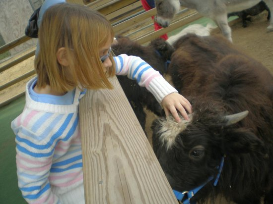 Luray Zoo - A Rescue Zoo: More Petting Zoo