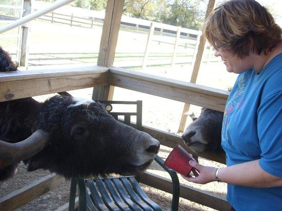 Luray Zoo - A Rescue Zoo: Petting Zoo