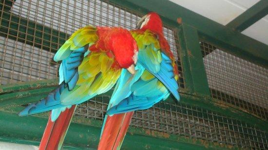 Temaiken Biopark : colores radiantes y muy dulces