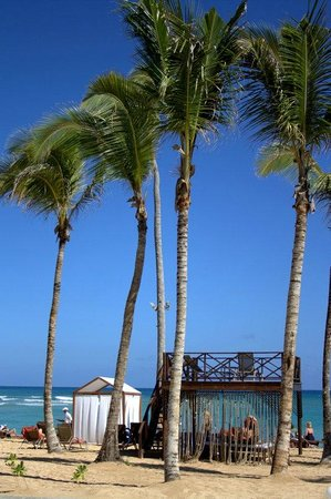 Breathless Punta Cana Resort & Spa : plage, palmiers