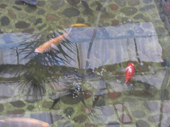 Hotel Teocalli: peces
