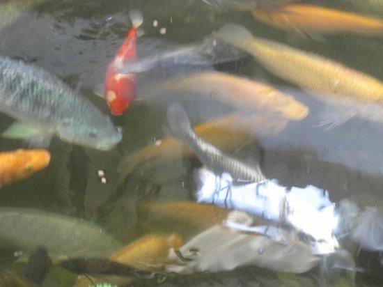 Hotel Teocalli: tanque con peces