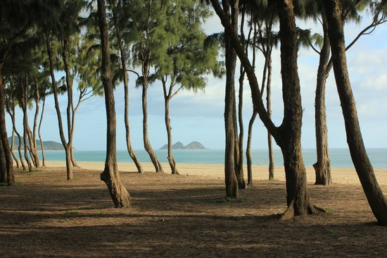 Oahu Photography Tours: Everything is beautiful in Hawaii