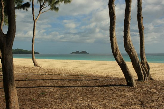 Oahu Photography Tours: Amazing tree lined beach
