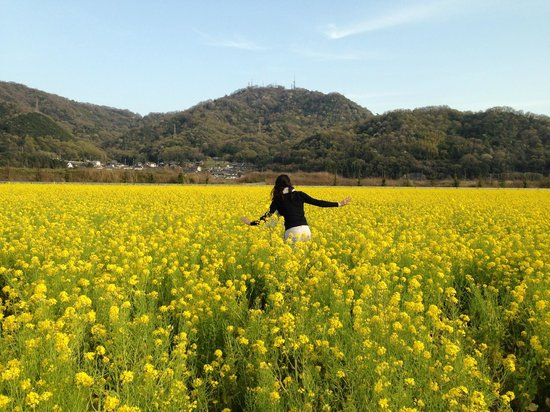 Kasaoka, Japan: Rape Flowers
